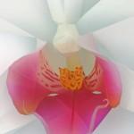 Dirk Petzold: Orchidee