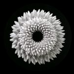 Blooms: Strobe Animated Sculptures by John Edmark